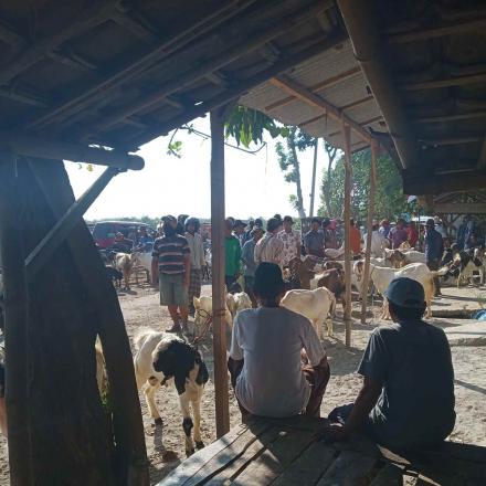 Suasana Pasar hewan kambing desa gandrirojo menjelang hari raya idul adha